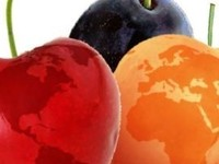 International Stone Fruit Conference 2016